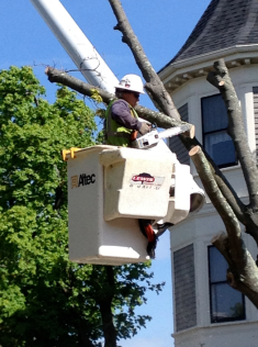 Cherry Picker in felling.png
