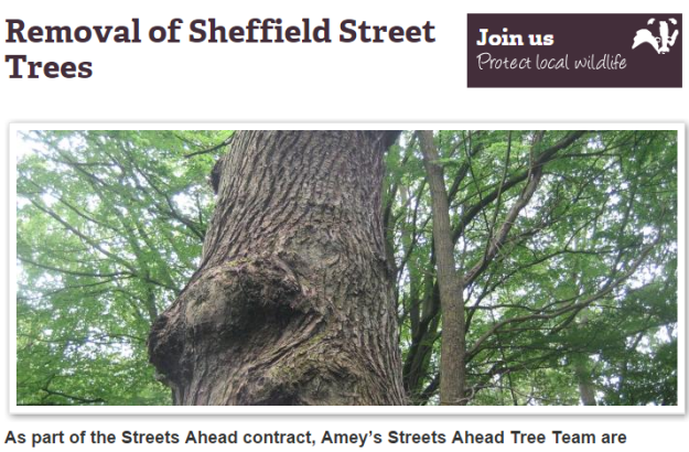 Removal of Sheffield Street Trees   Sheffield Wildlife Trust.png