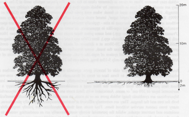roots-diagrams